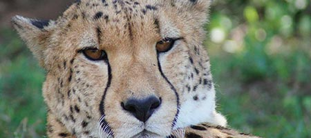 1_0002_zululand-wilderness-safari-header