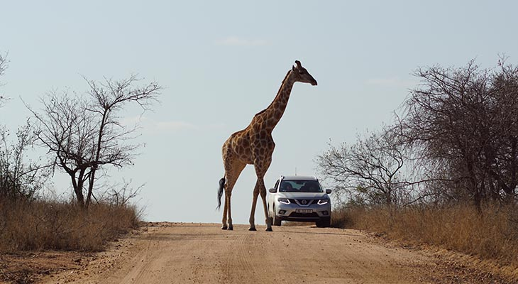The Best Of Kruger - Outdoor Africa