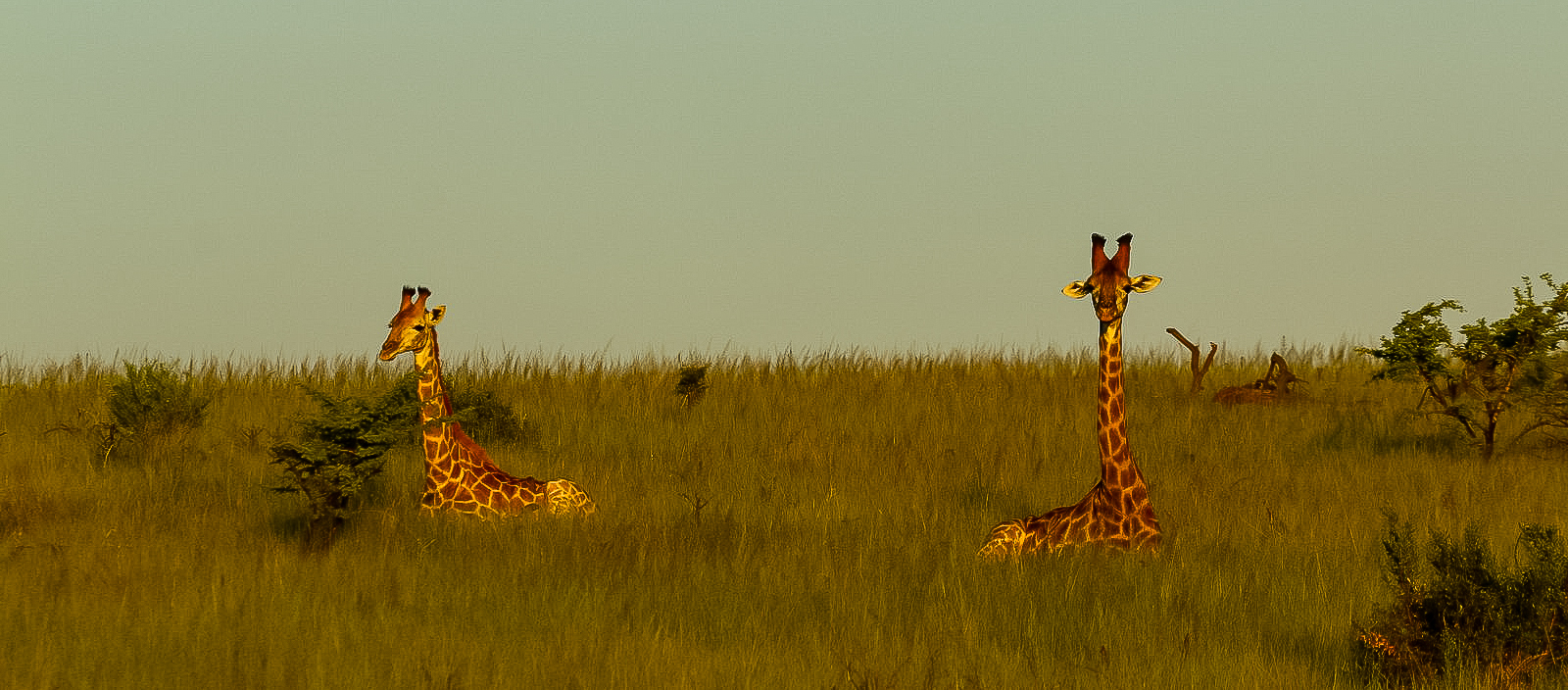 Ithala Game Reserve : Destinations of South Africa Blog Series
